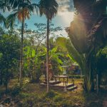 koh-chang-bluelagoon-selection-tropical-trees